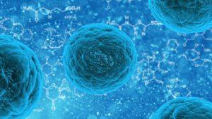 veterinary stem cells